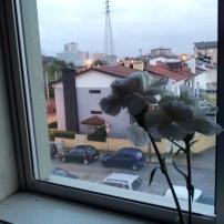 My flowers in the window