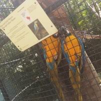 Macaws at the Trinidad Zoo