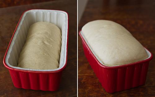 2nd-rise-of-the-shokupan-dough